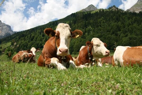 OICB: La zootecnia italiana reclama maggiore attenzione per quanto espresso fino ad oggi in tema di sostenibilità